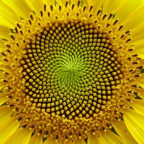 fibonacci4.jpg