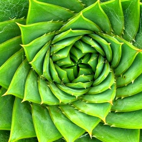 fibonacci6.jpg