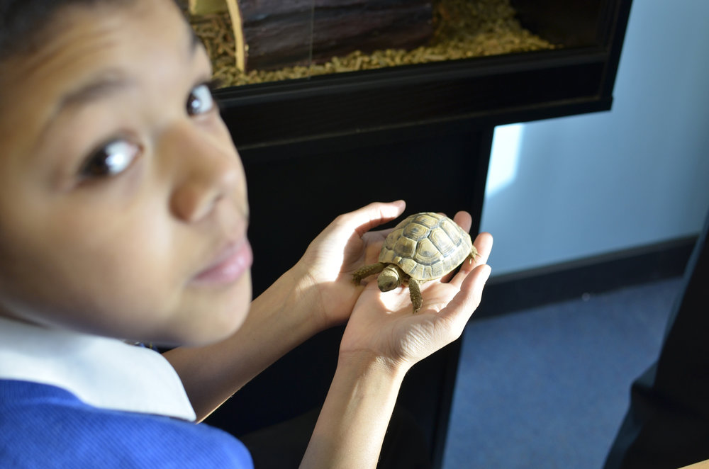 Lea Manor students have access to a range of animals including a tortoise, rabbits and Irwin the dog