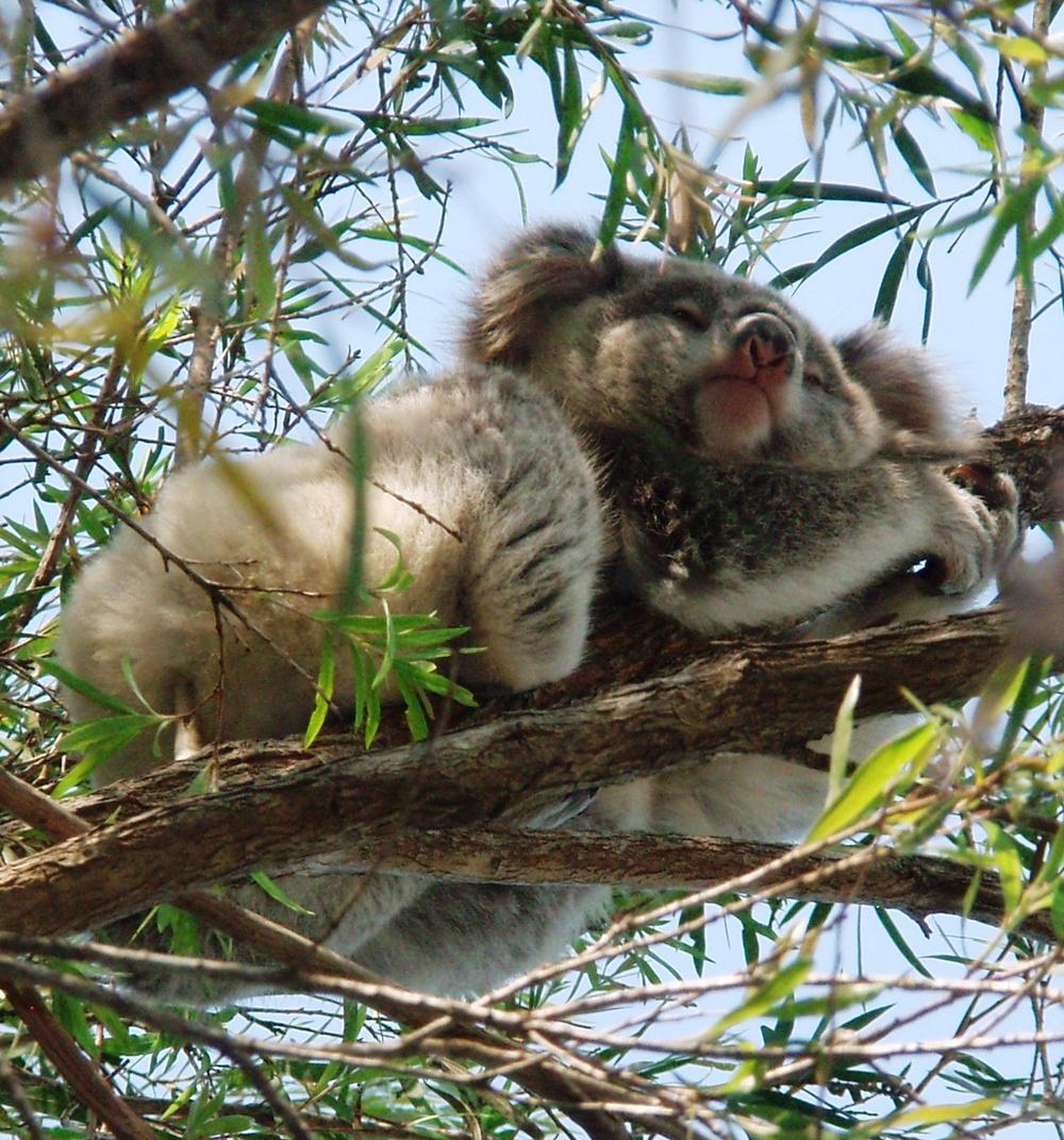 Lismore, Australia