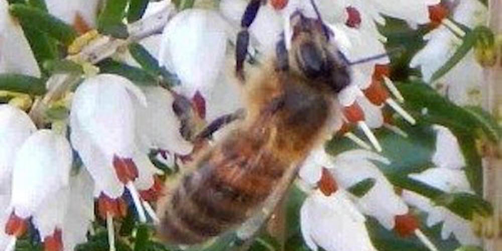 HoneyBee2_1.jpg