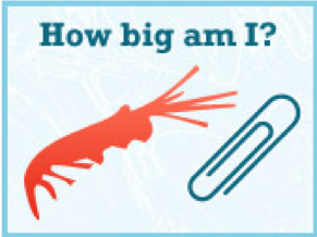 http://www.krillfacts.org/1-krill-facts-center.html