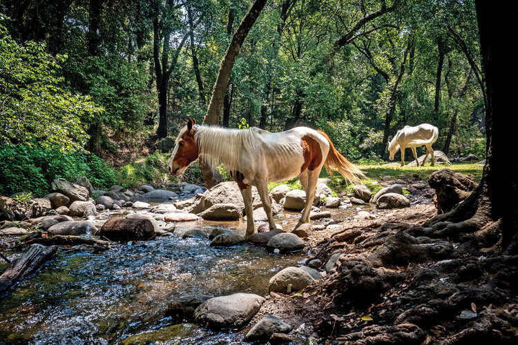 Horses drink from the Río Magdalena, Mexico. Image: Luc Forsyth