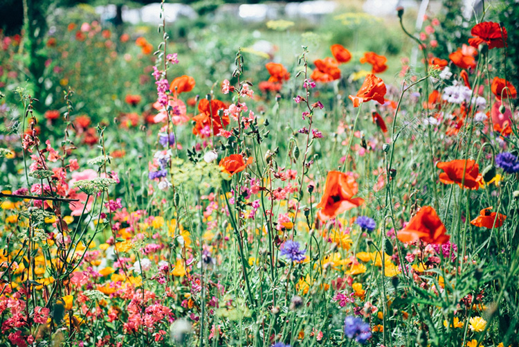 Figure 1. Wildflowers Photo by Eva Waardenburg on Unsplash