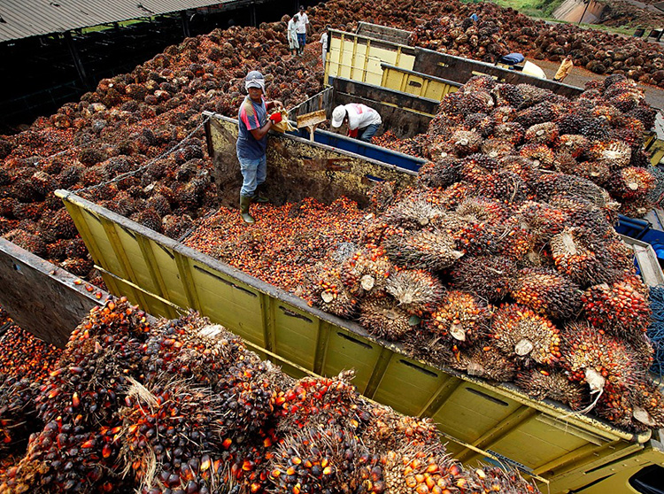 Figure 2 Palm Oil Factory Sevki79 [CC BY-SA 4.0 (https://creativecommons.org/licenses/by-sa/4.0)], from Wikimedia Commons
