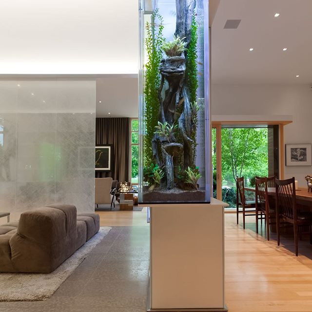 We worked within a private home designed by Dirk Denison Architects to create this fresh water⠀ aquatic environment that contained  fresh water plants and neon tetras, a beautiful , light filled animal that lives in the streaming waters of the Amazon - a fragile and threatened eco system. The home owners are avid divers with conservation concerns,  and wanted to bring memories of favorite places from around the globe into their home. Moreover, to invite conversations about the fragile nature of this eco system to guests. #neontetras🐠 #amazonriverbasin #freshwaterplants #waterplants ⠀ #tranquilenvironments #healingenvironments #living art #contemporayaquariums #aquaticdesignanddevelopment #aquaticdesign⠀