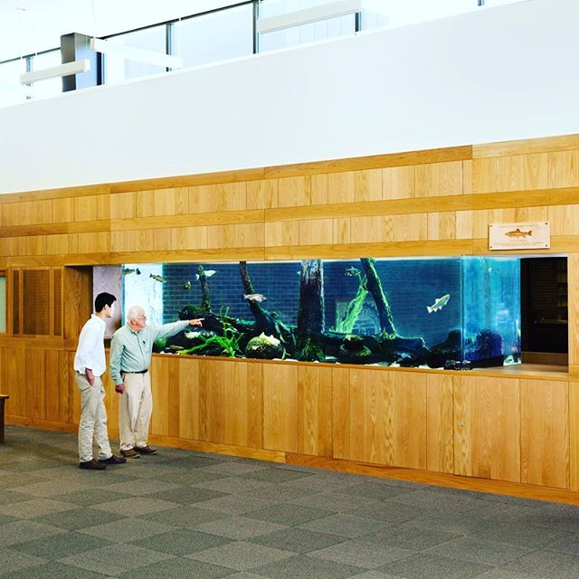 School of Trout! For those about to rock, we salute you. Our design and habitat for the University School near Cleveland. The aquarium is in homage to the naturalist Terry Harmon, and his work in real life science, such as the hatchery program where his concerns identified an indigenous trout  that our Native Americans  were sustained by and is now being protected. ⠀ ⠀ #terryharomonnaturalist #iindigenousspecies #trout #cuyahogariver #chrissiehynde⠀