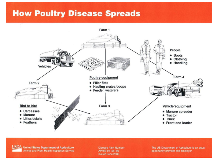 how poultry disease spreads.PNG