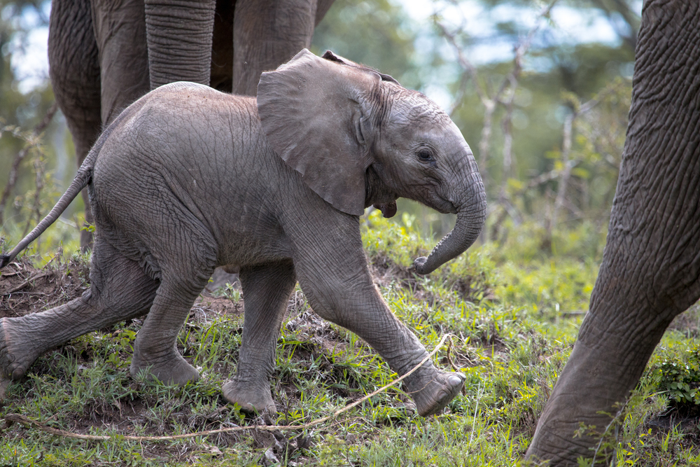 HappyBabyElephant_023.jpg