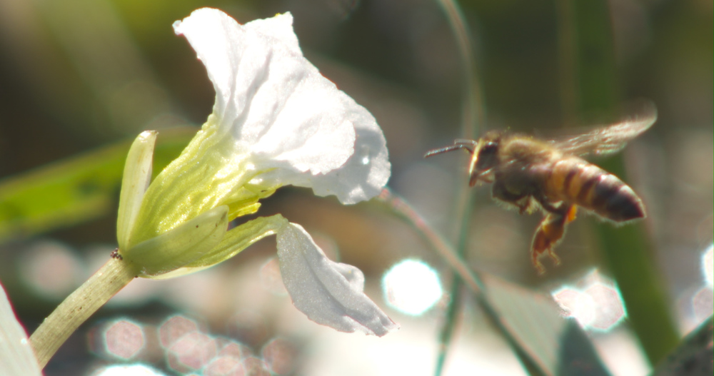 Bee landing.jpg