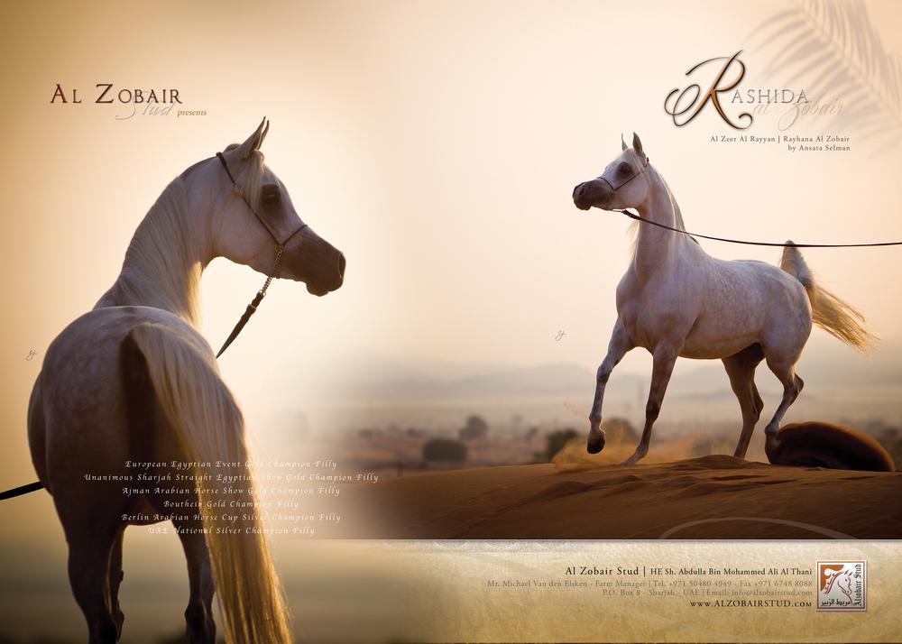 Al Zobair ad.jpg