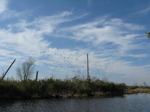 BD Duck Landscape II.JPG