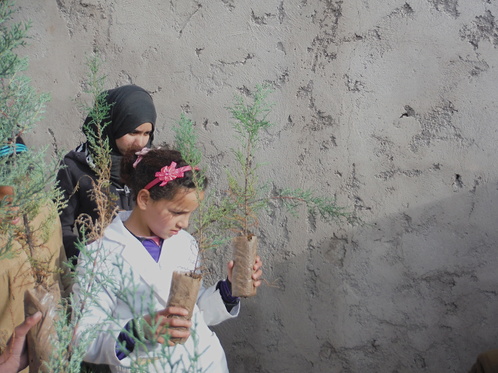 planting argan trees