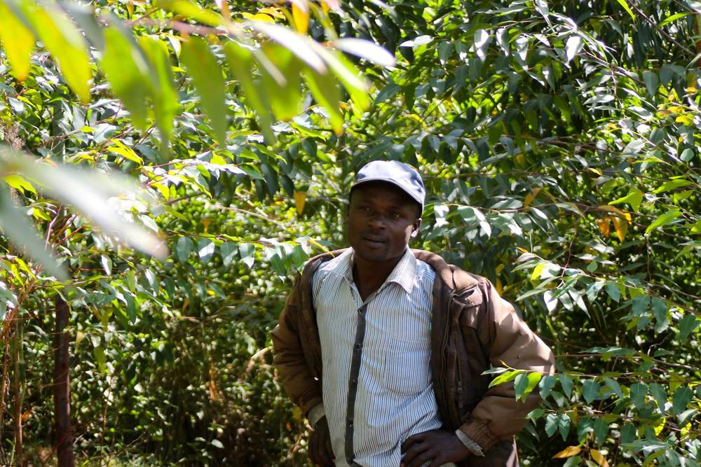Anton, The Kilgoris Project's farmer, among the established eucalyptus trees