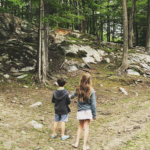 La magie d'un daim en forêt... comme dans un conte de fée #naturewalk #daim #parcomega #sortieenfamille