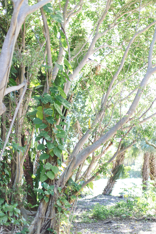 Beach Trees - Beach Wedding Photos - destination Orlando wedding photographer - Jaime DiOrio