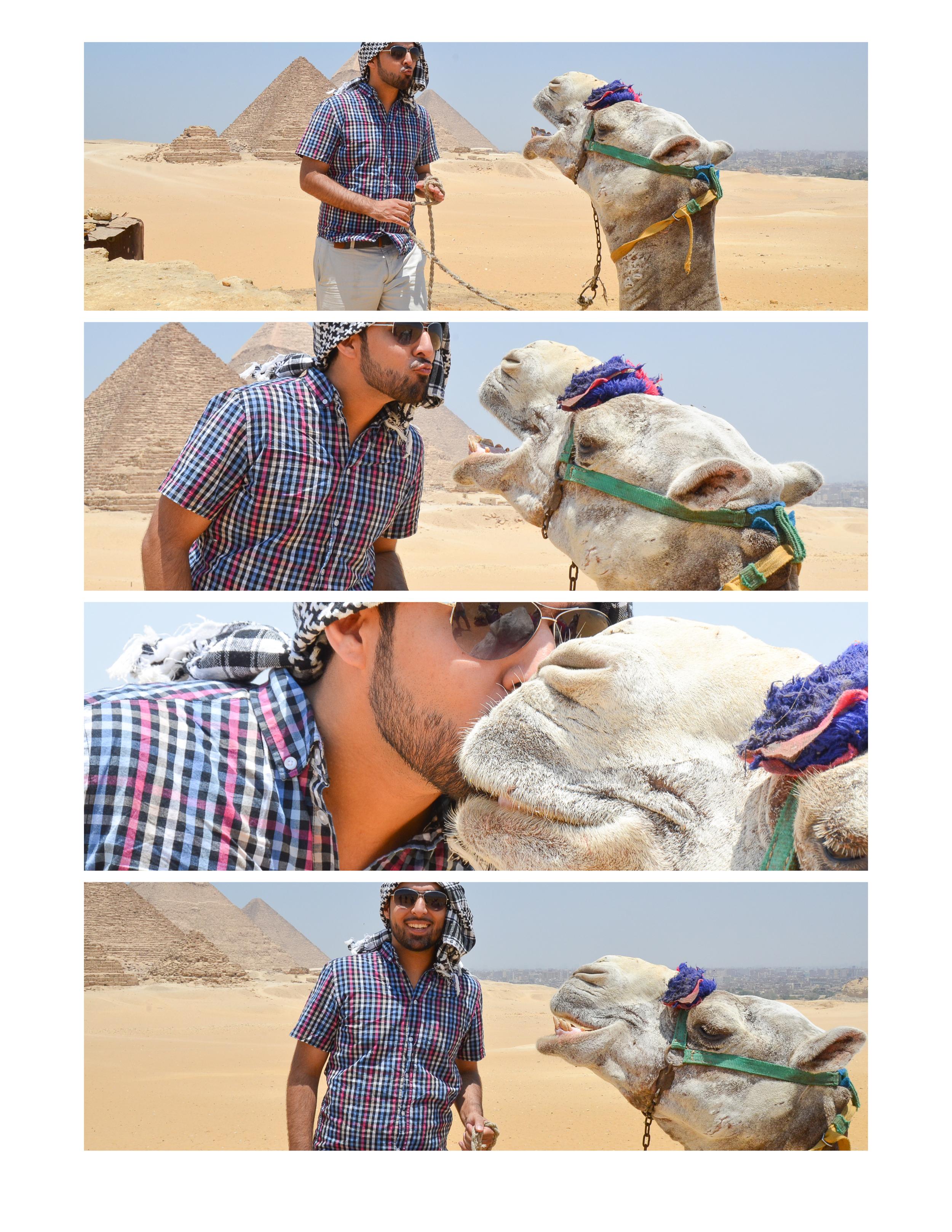 ali camel