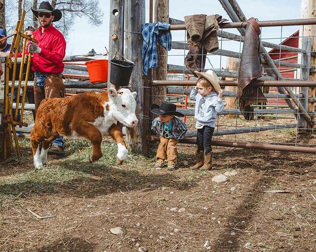 Calves and Kiddos. • 📸: @gill_jessica