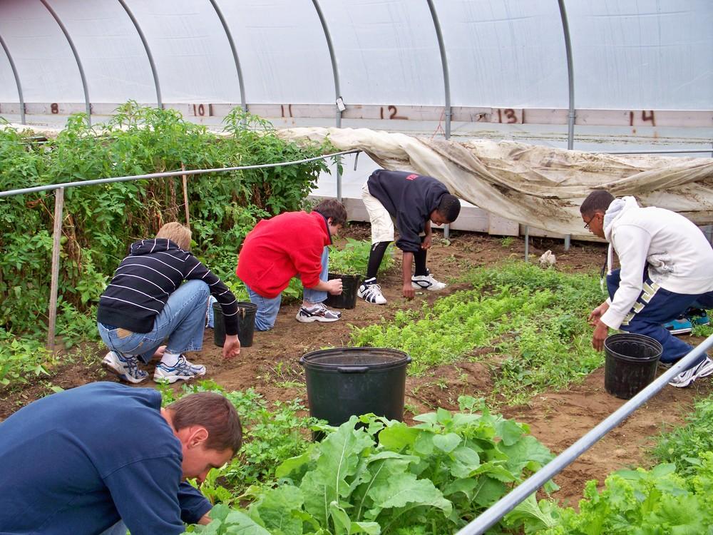 greenhouse 003.jpg