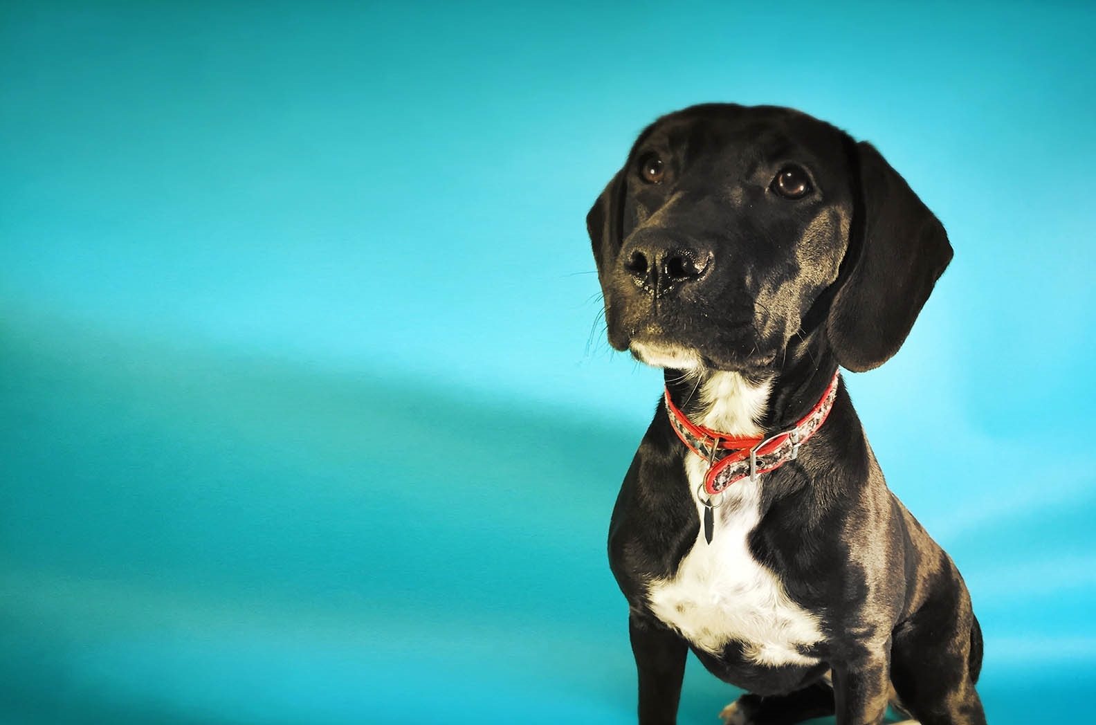 Trimnasium dog grooming santa barbara goletatrimnasium ebony solutioingenieria Gallery