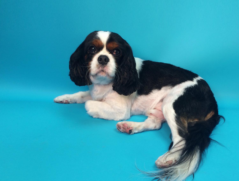 Trimnasium dog grooming santa barbara goletatrimnasium rudy solutioingenieria Gallery