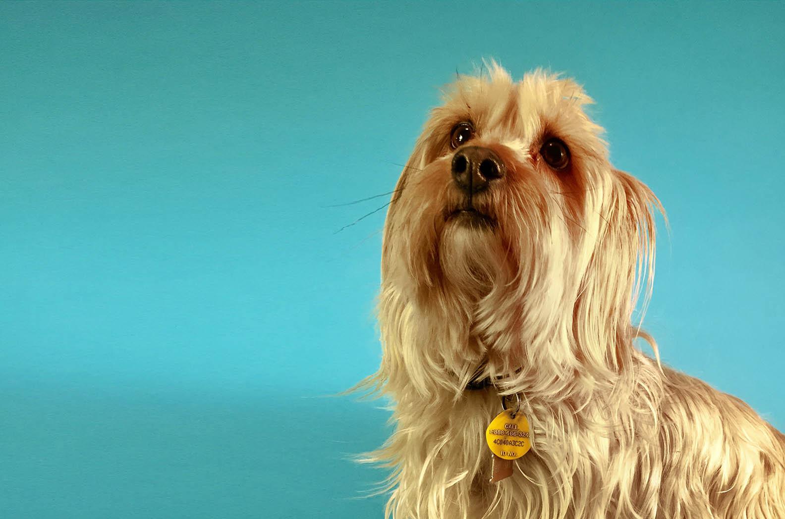 Trimnasium dog grooming santa barbara goletatrimnasium poppy solutioingenieria Gallery