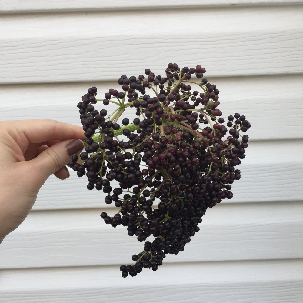 Fresh Elderberries -