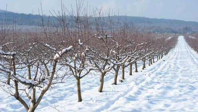 TreesWinter.jpg.653x0_q80_crop-smart.jpg