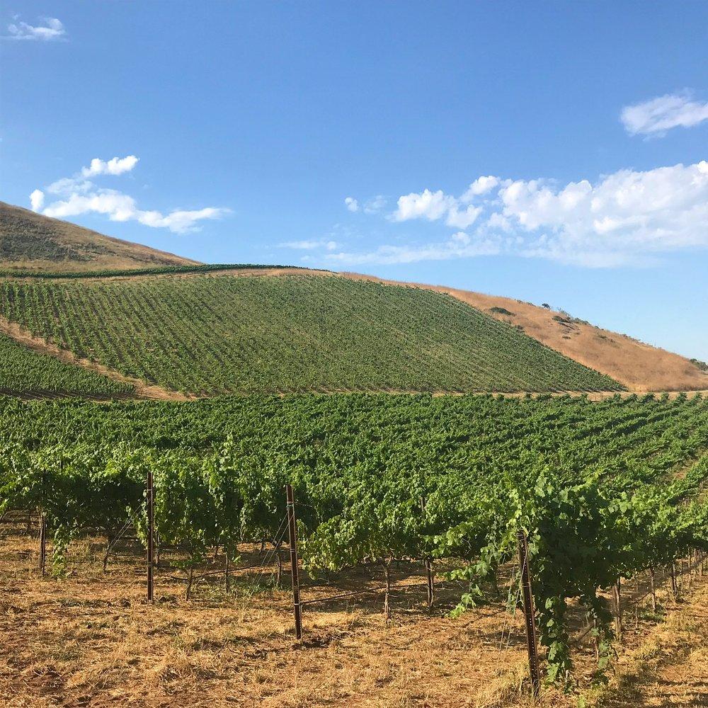 Summer 2018, Bien Nacido Vineyard, Roussanne