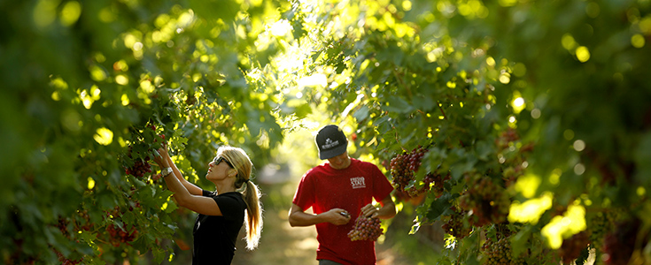 Image: Fresno State Viticulture and Enology Students via  Fresno State Viticulture & Enology Department
