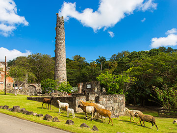 StKitts-Our-Island-Sightseeing-Attractions-Historical-Wingfield-River-and-Water-Works.jpg