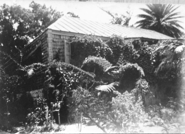 1975 - This photograph was taken when the present owner first saw it. Bush had entered the building and spread throughout the inside. The garden was overgrown and free of flowers. However the famous Saman Tree was magnificent, inspiring the present owner to easily visualize a beautiful future.