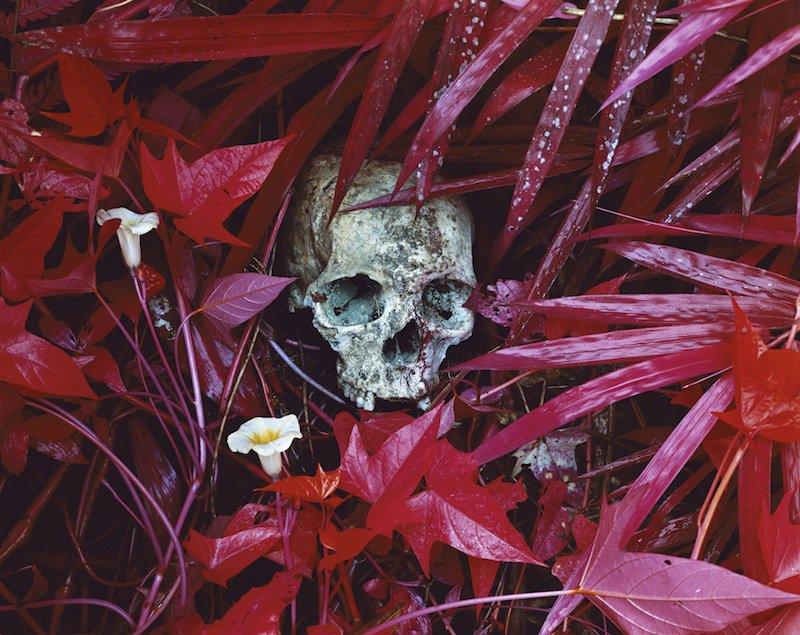 aw4gmk_enc_108_skull-11x14f-hiresrgb_0.jpg