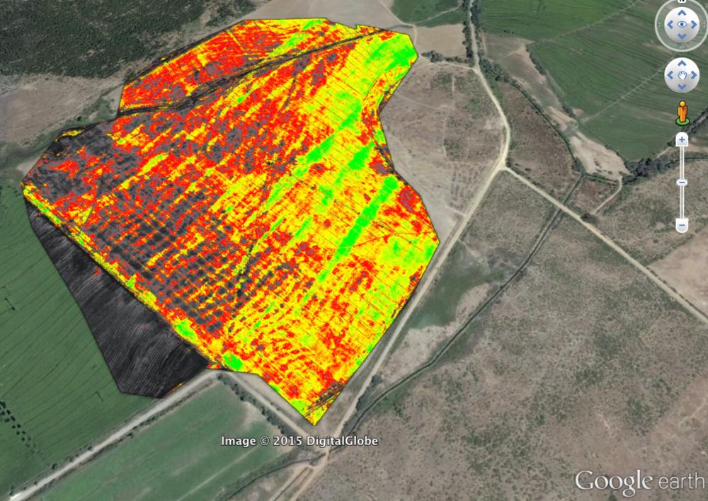 Mapa de salud de cultivo de trigo, colocado sobre Google Earth