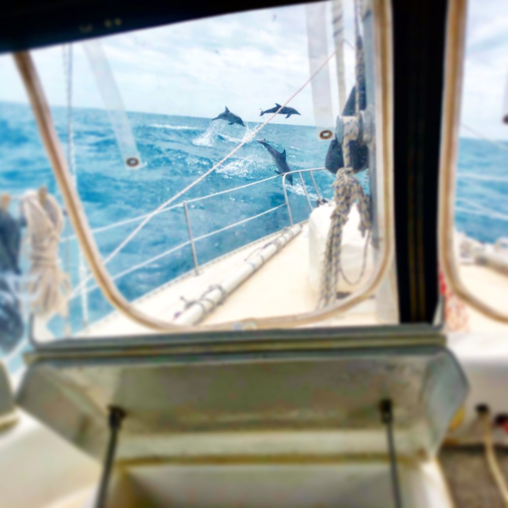 Dolphins playing at Silver Crow's bow as we traveled across the Gulf to Key West!