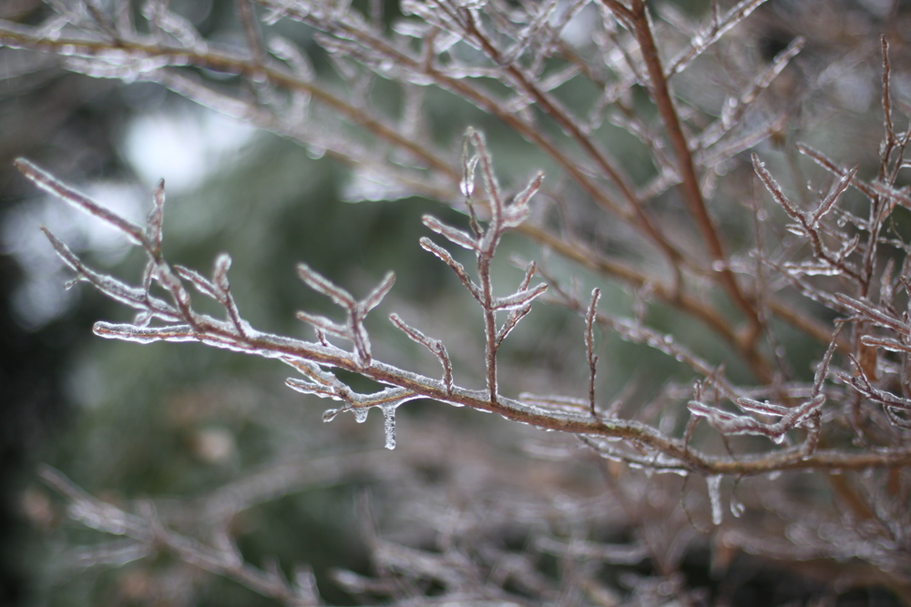 ice storm | madeline made