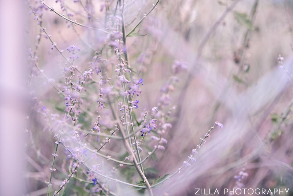 Zilla-Photography-Rhodes-Park-Boise-Lavender-Flower