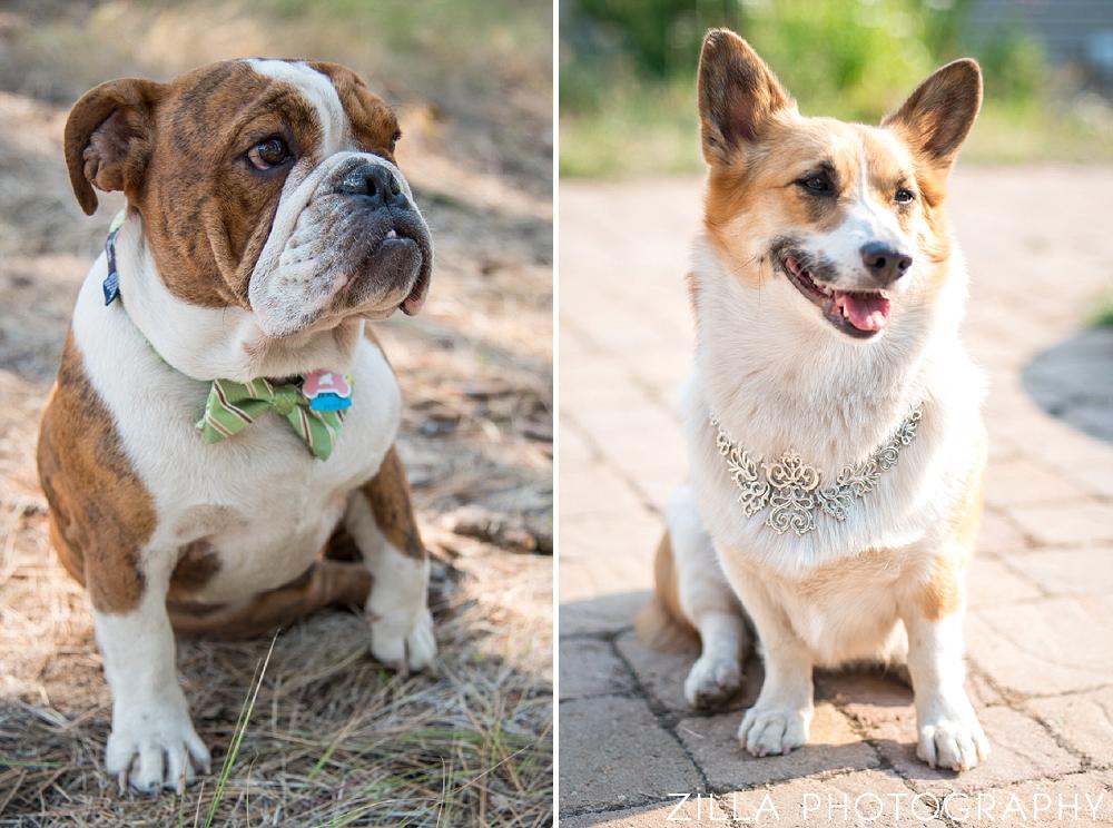 Corgi-Bulldog-Dressed-Up-Dog-Wedding-Guests