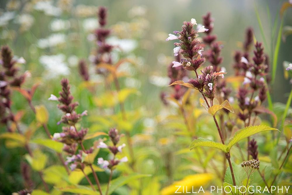 Outdoor-Wedding-Wild-Flowers