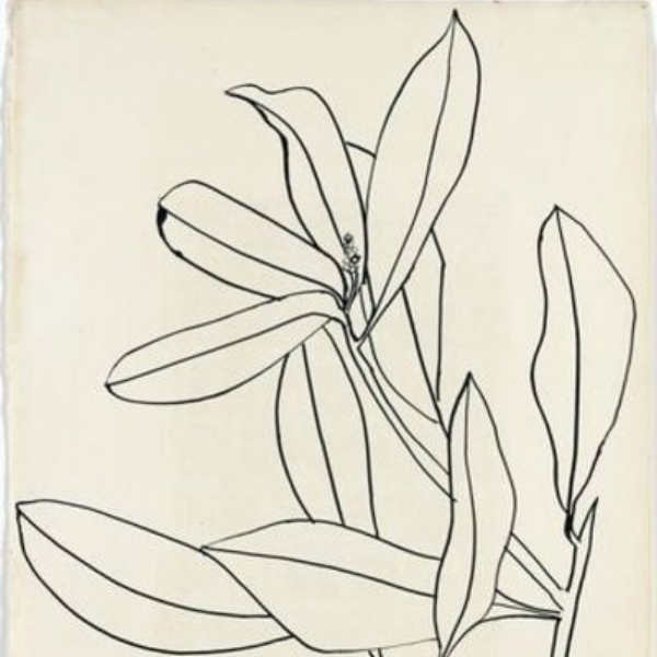"Ellsworth Kelly, ""Leaves, Ile St. Louis"", 1950"