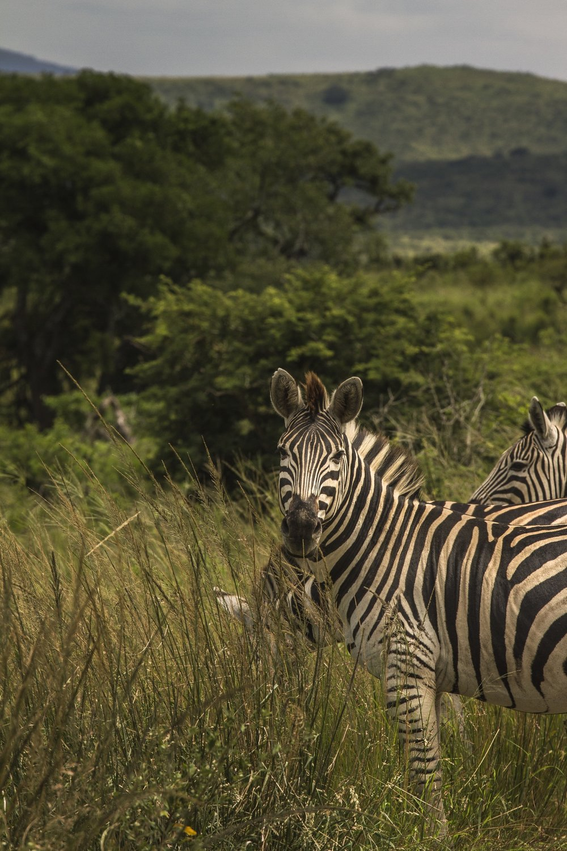 south-africa_9540500755_o.jpg
