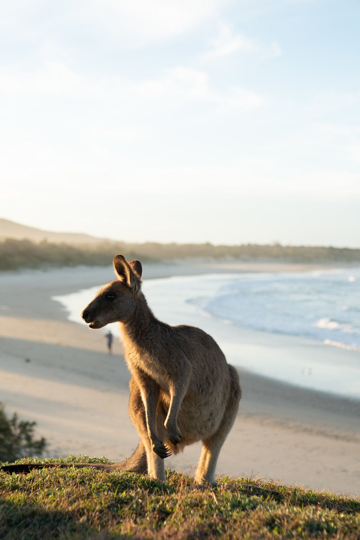 NSW1NC-04966.jpg