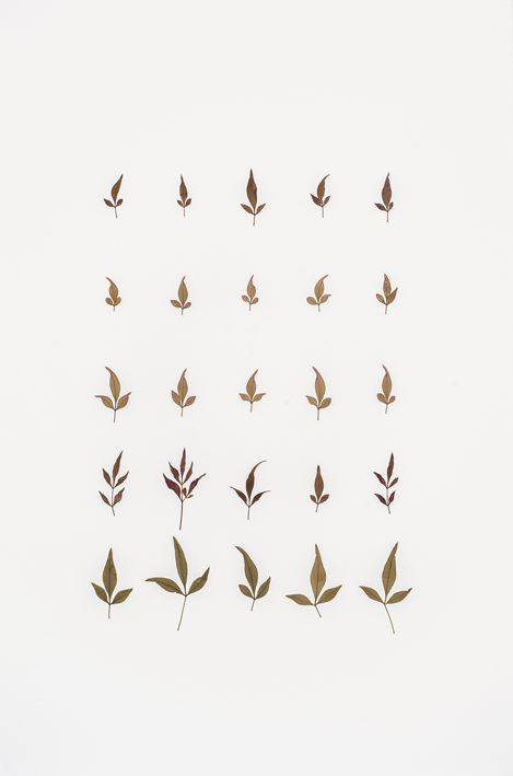 Sacred bamboo leaves, 56 x 38 cm