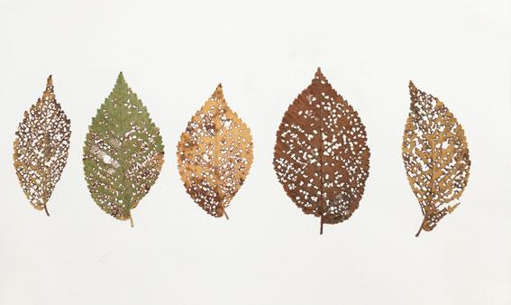 leaf-drawing-1.jpg
