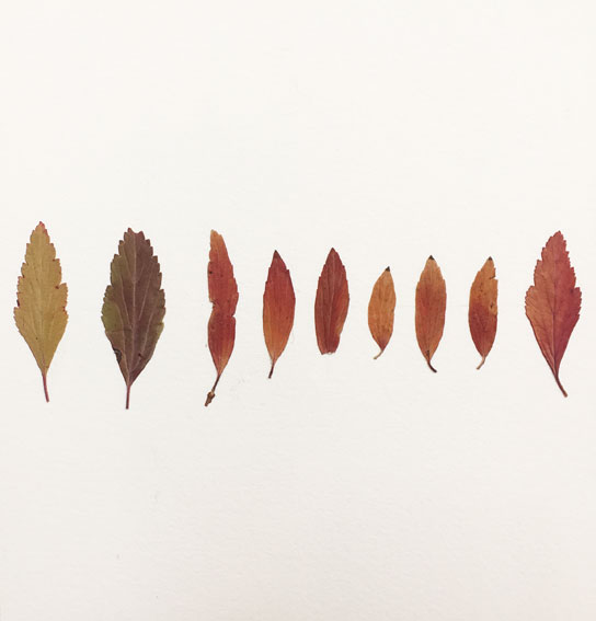 leaf-drawing-2.jpg