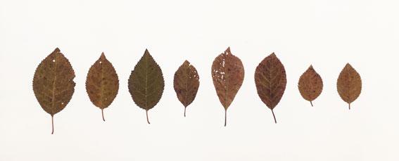 leaf-drawing-3.jpg