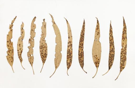 leaf-drawing-6.jpg