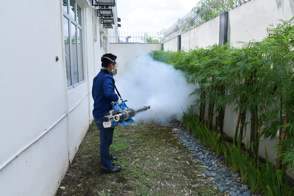 Pest Control Service |   READ MORE