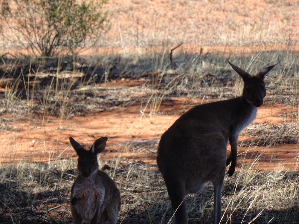 Gundabooka DSC09898 NSW.JPG