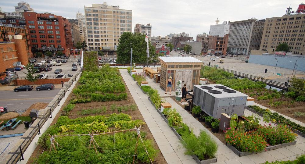 Urban Harvest STL, Food Roof